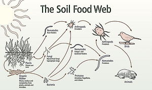 Robust Compost bringing soil to life, by restoring the soil microbe biome.